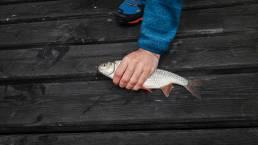 Unser erster Fisk