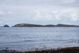 Irland Delfine Donegal