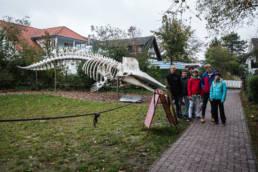 Wangerooge Pottwalskelett